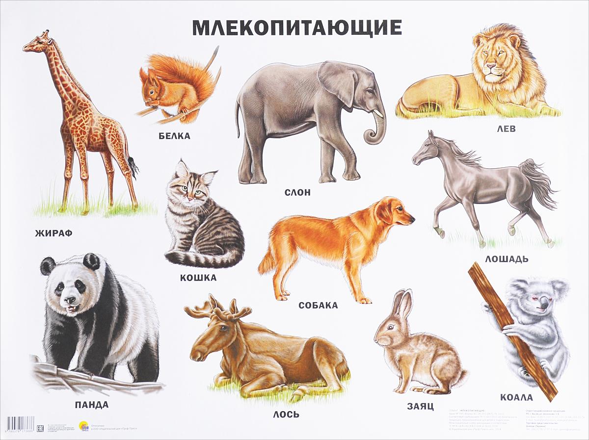 Картинки животных и описания к ним
