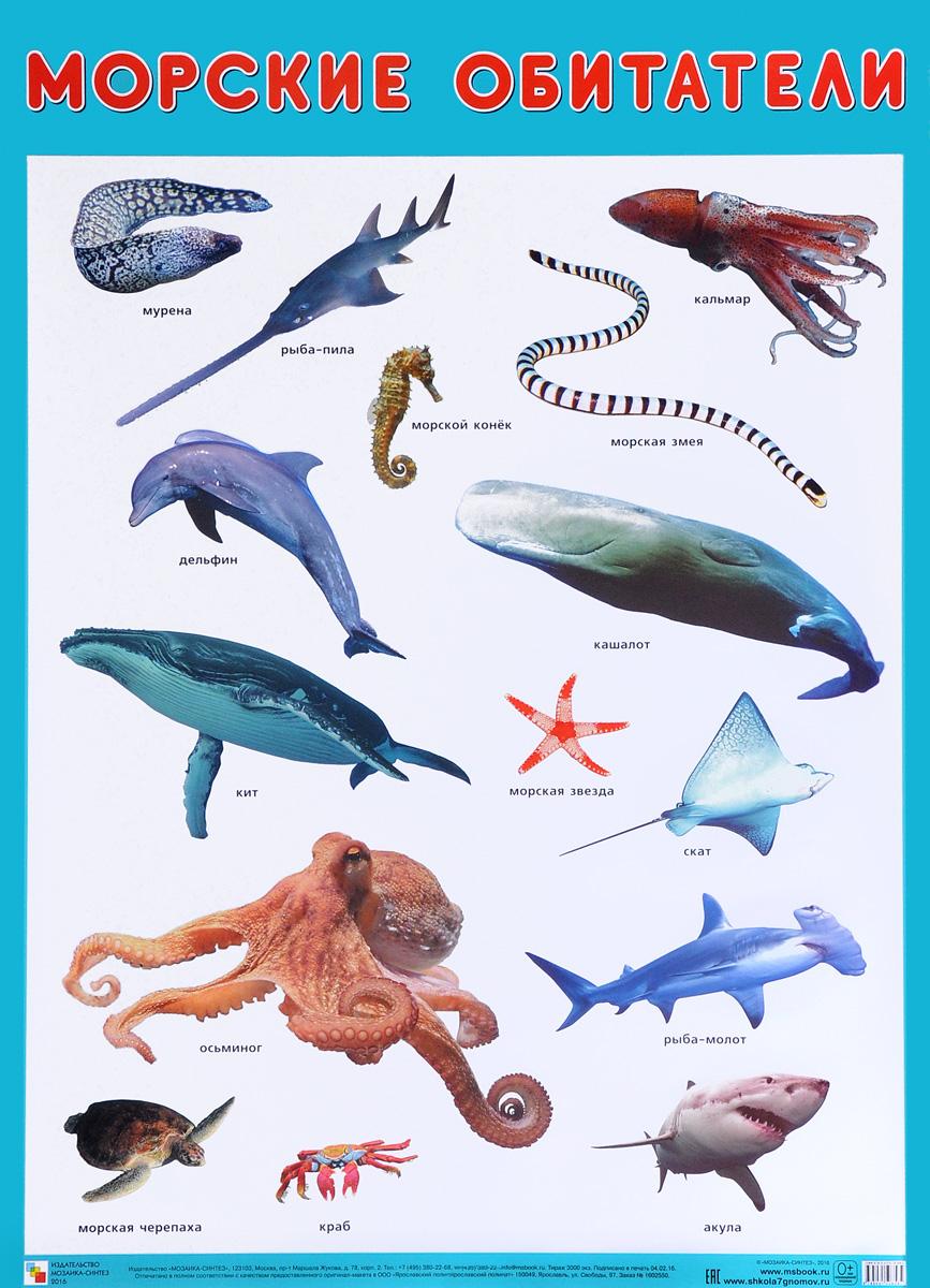 название морских животных с картинками когда наши